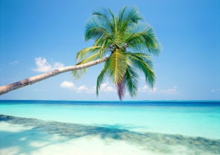 Обои Blue Shore And Palm Tree для Android