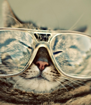Обои Serious Cat In Glasses для телефона и на рабочий стол 132x176