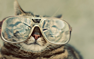 Обои Serious Cat In Glasses на андроид