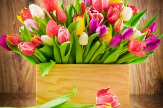 Картинка Bunch of tulips для LG Spectrum