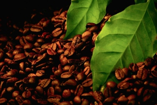 Обои Coffee Beans And Green Leaves на телефон
