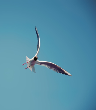 Картинка Seagull Flight на телефон 132x176