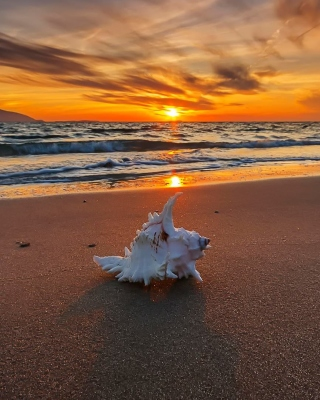 Обои Sunset on Beach with Shell на LG 160
