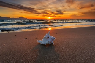 Обои Sunset on Beach with Shell для 1600x900