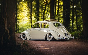 Обои forest, Volkswagen, sunshine, wheels, trees, sunroof, rear, road, Beetle