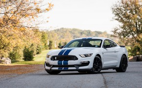 Обои White, Blue, GT350, Shelby, Strips