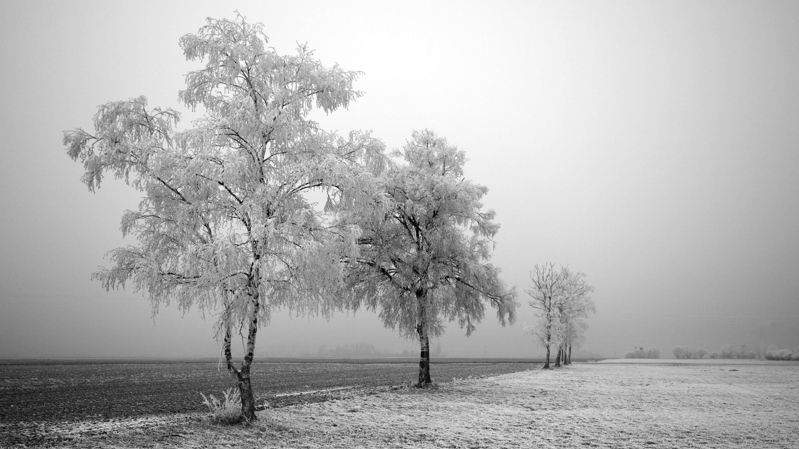 trees-winter_00424435